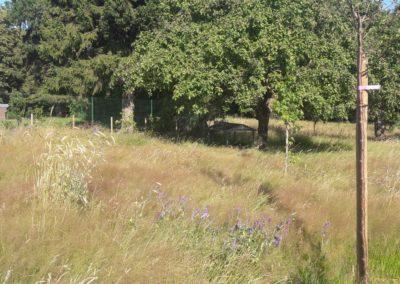 Forêt-jardin nourricière à Monceau-sur-Sambre